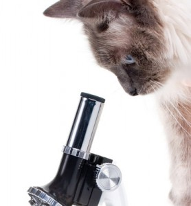 cat_microscope